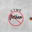 Squash Lyme Fiction